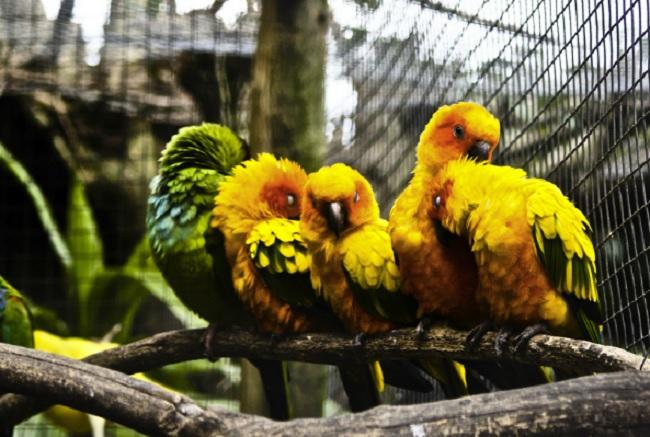World-of-Birds-Cape-Town.jpg