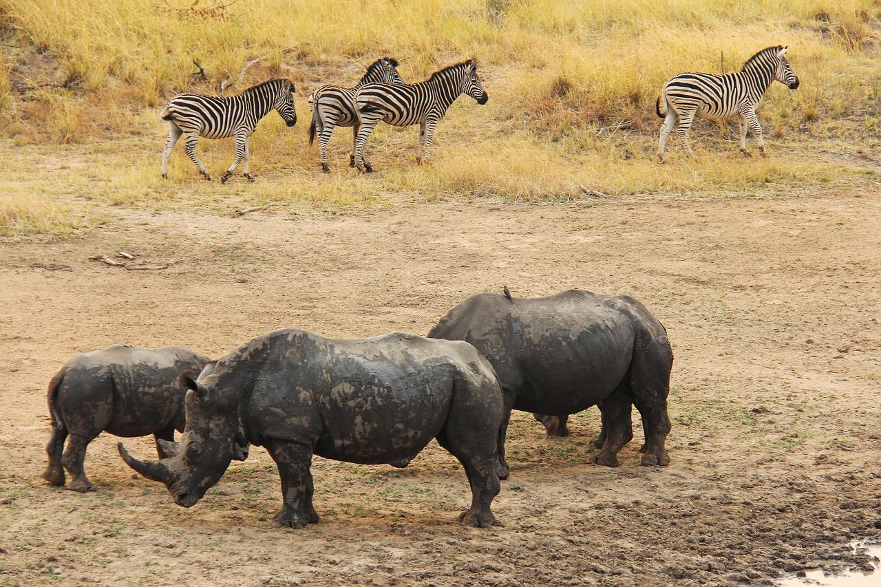 rhino-1221518_1280.jpg