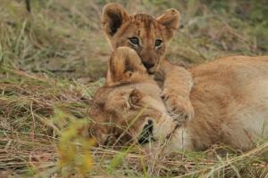 Séjours au Parc Kruger -