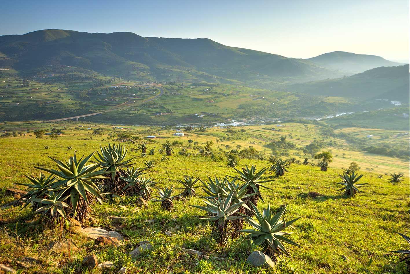swaziland-aloes-teagan-cunniffe.jpg