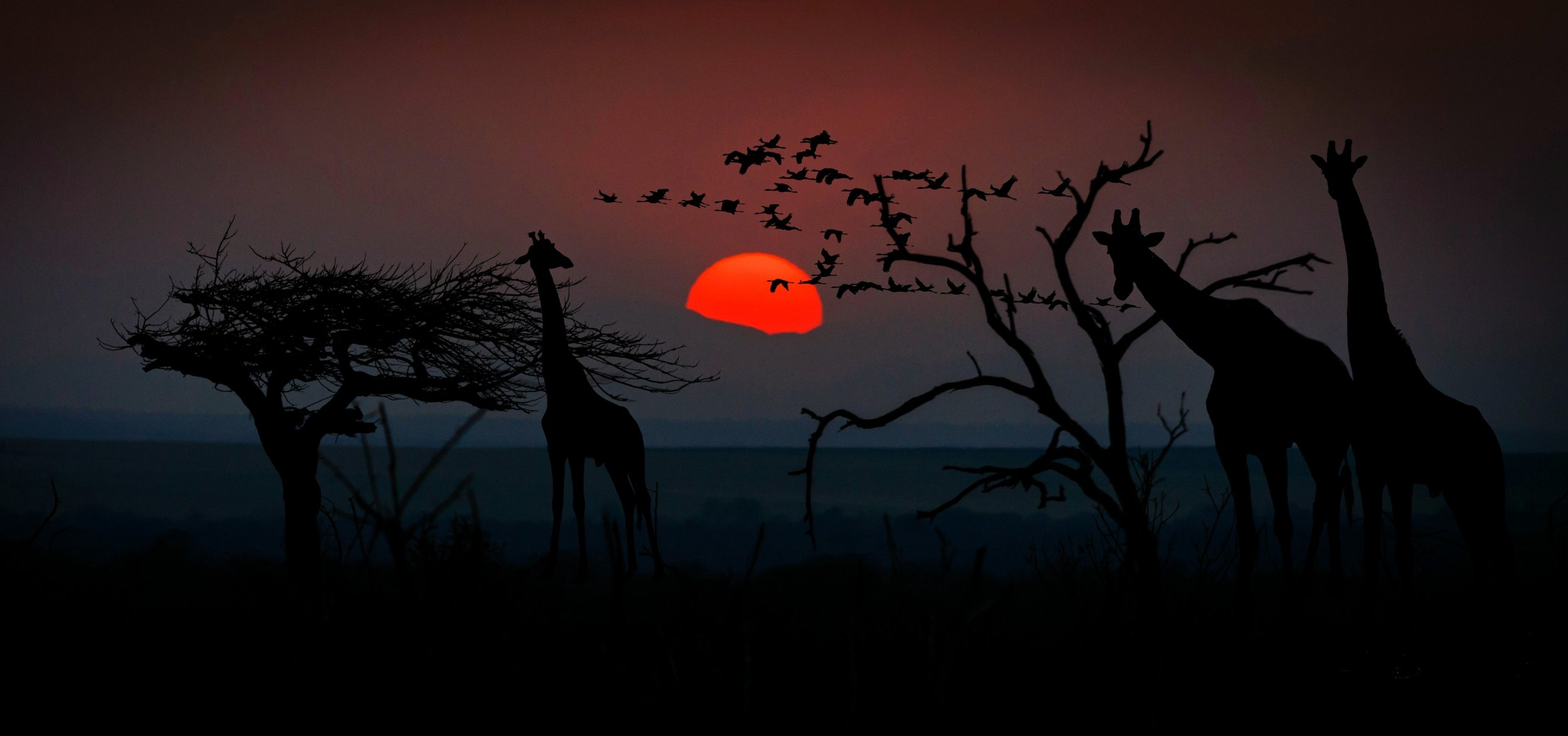 africa-2785836.jpg