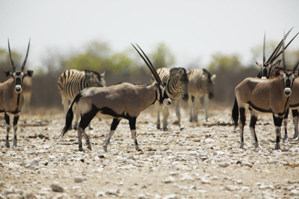 Parc National Etosha -