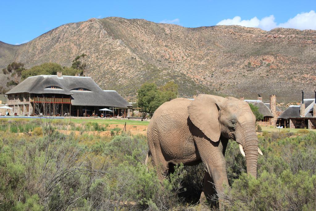 Aquila Safari Cape Town