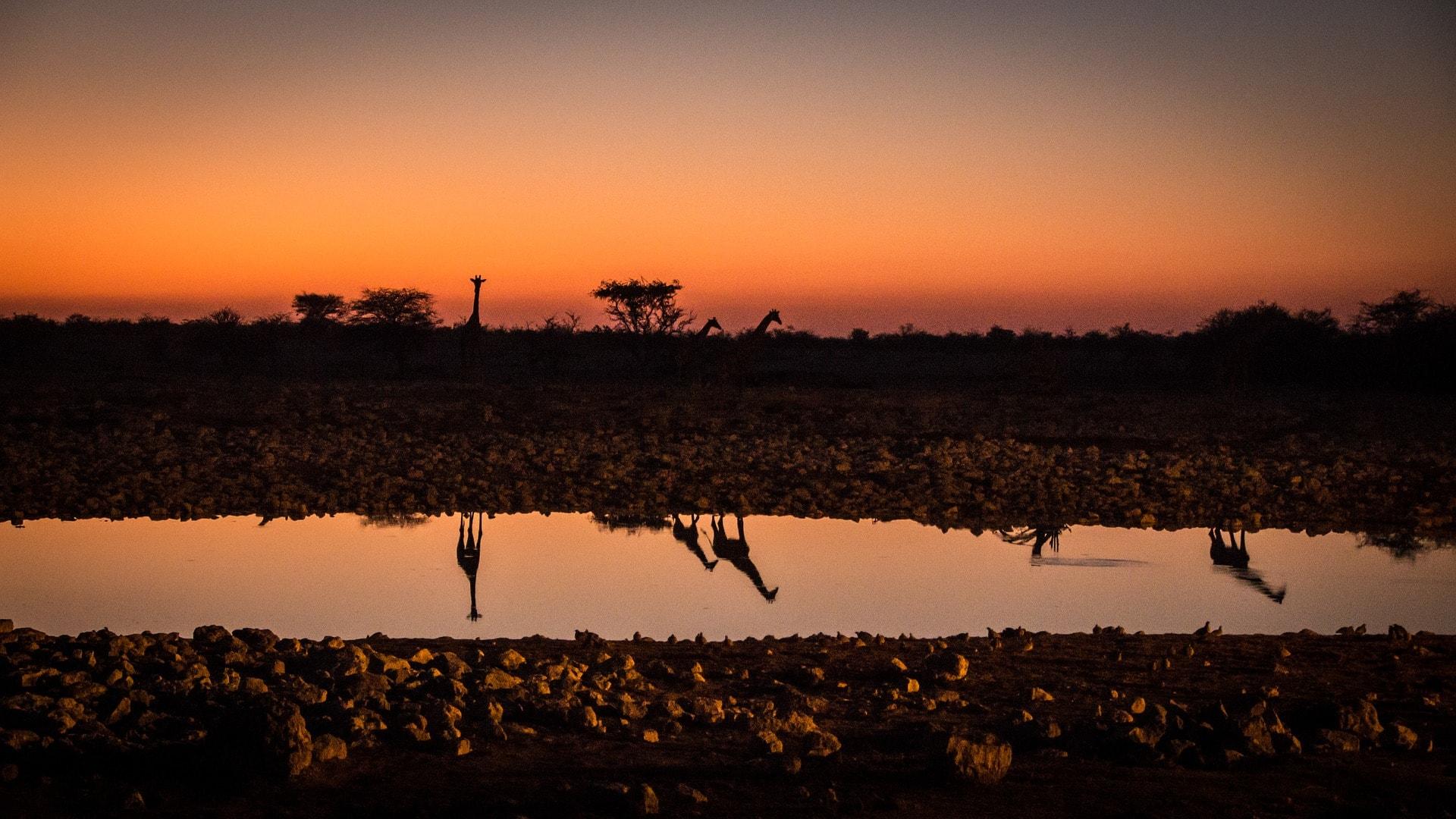 namibia-2949409_1920-min.jpg