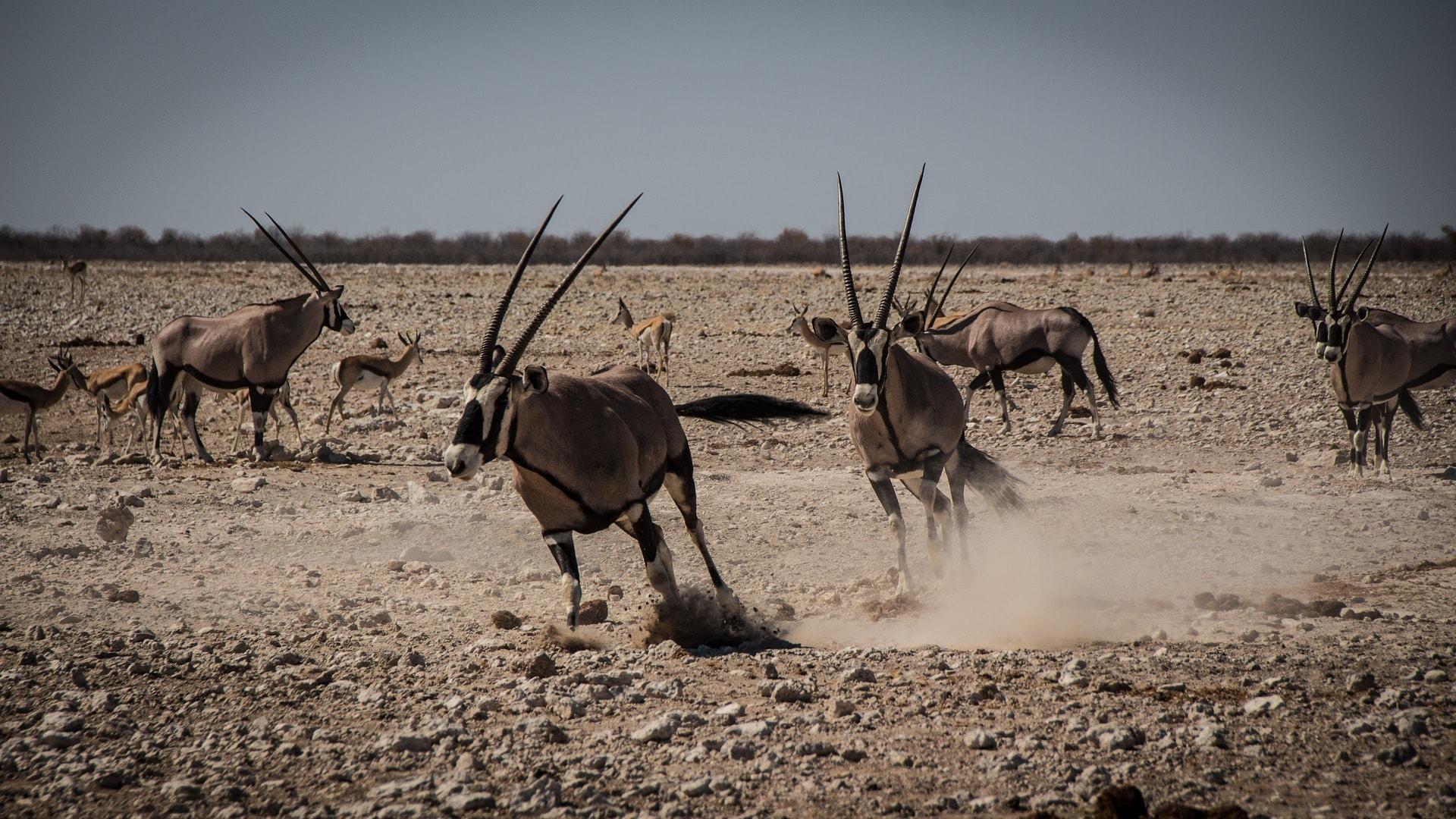 namibia-2939055_1920-min.jpg