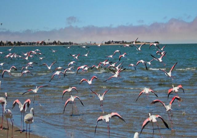Flamingo-flying.jpg