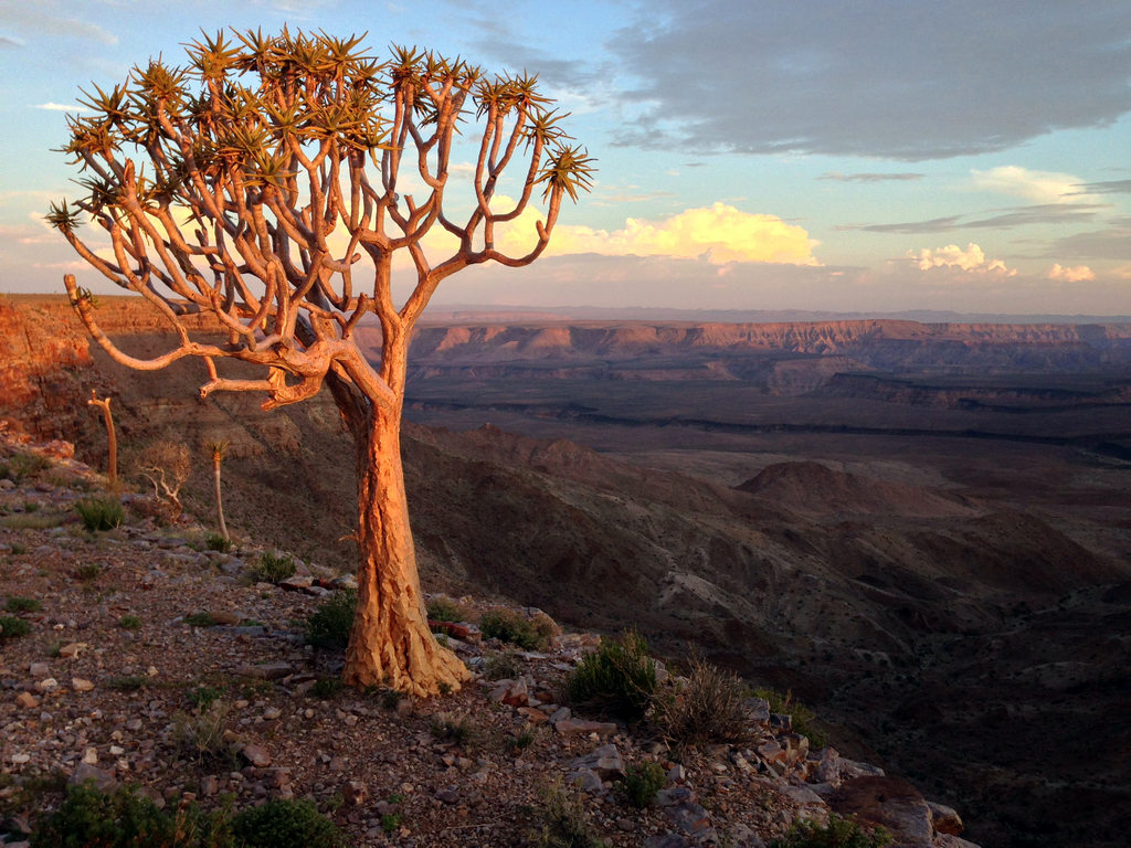 quiver_tree_overlooking_fish_river_canyon.jpg