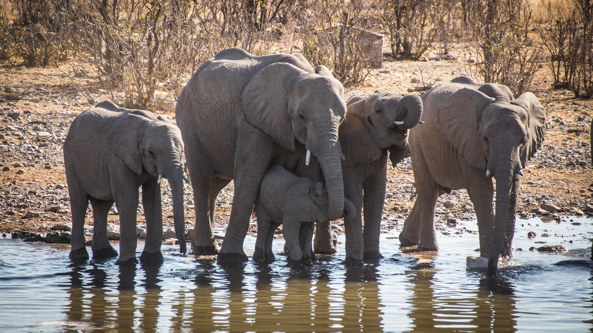 namibia-2939054_1920-min.jpg