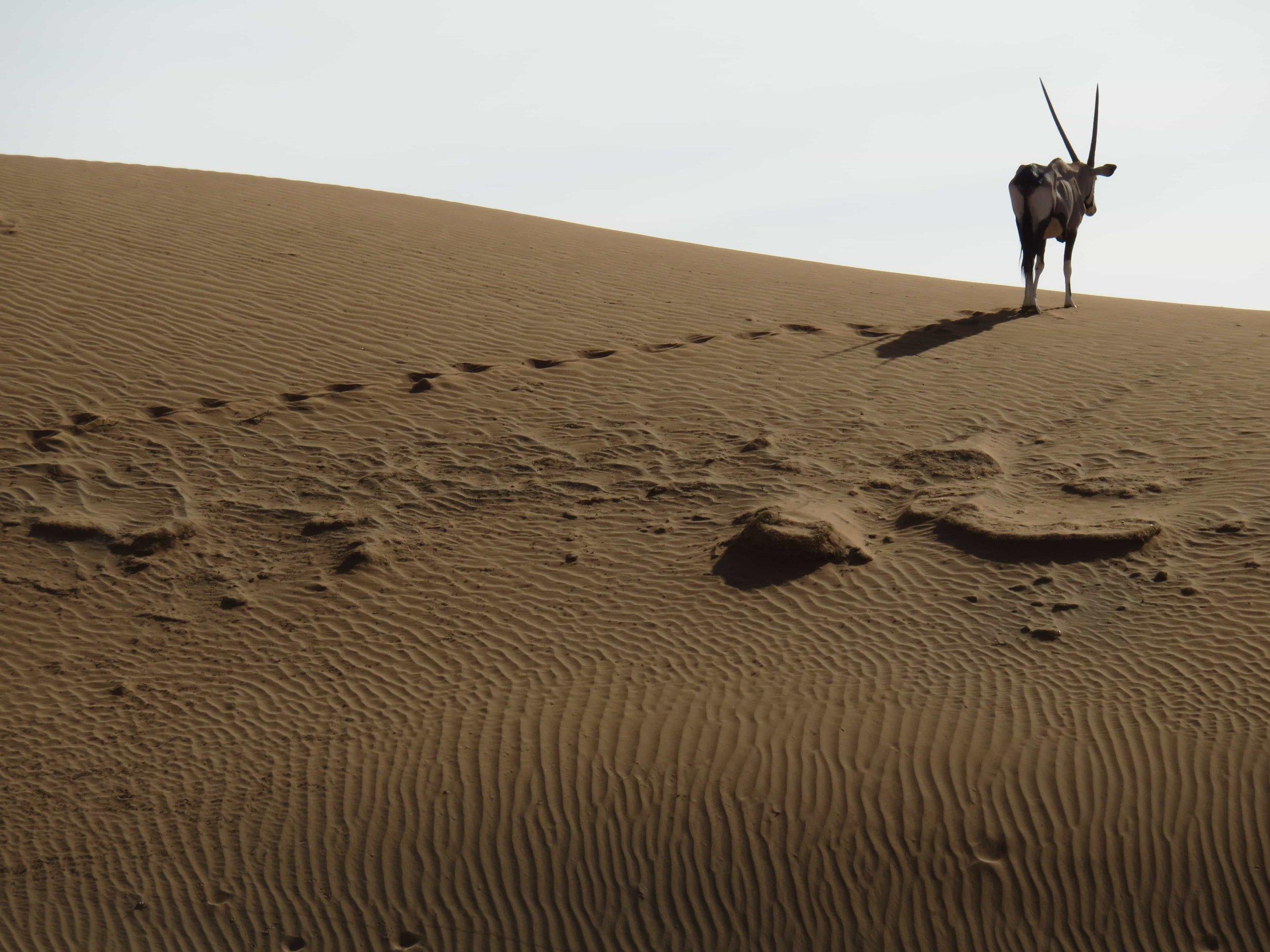 desert-3426349-min.jpg