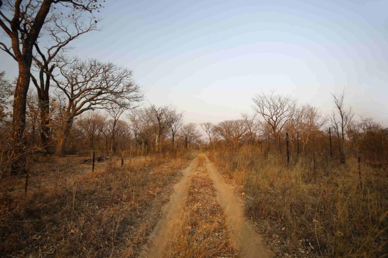 La grande traversée - Ce voyage complet va d'Etosha au désert du Namib, en passant par l'Ovamboland, l'oasis des chutes d'Epupa où vivent les Himbas, la région reculée de l'Hoanib à la recherche des éléphants du désert, les gravures rupestres de Twyfelfontein et la ville balnéaire de Swakopmund.14 jours / 13 nuits