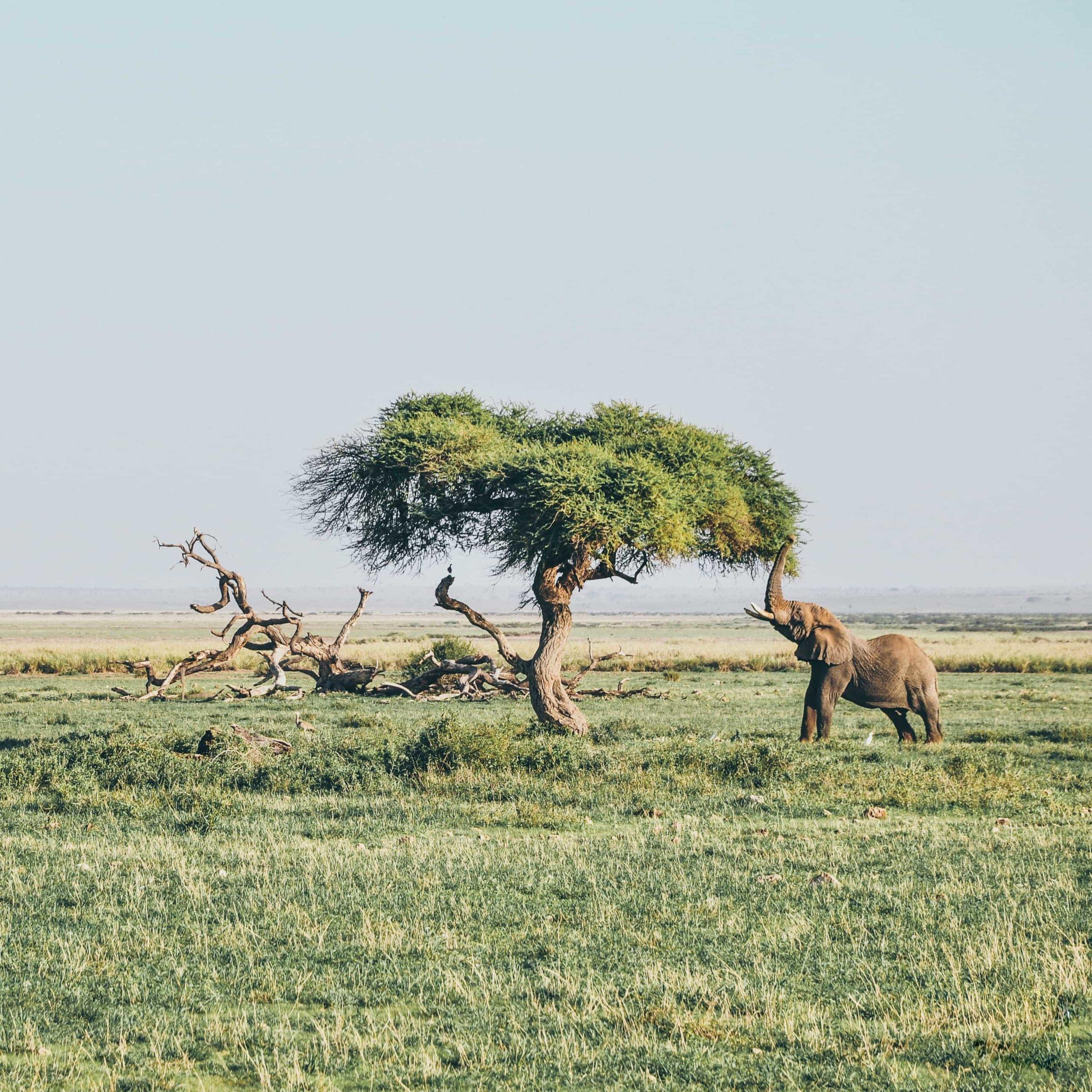 Un safari en Afrique australe