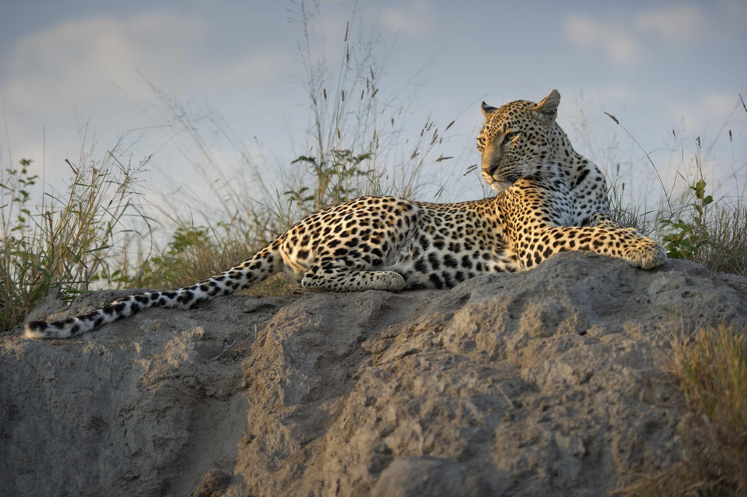 Toutes les informations sur Kruger Park -