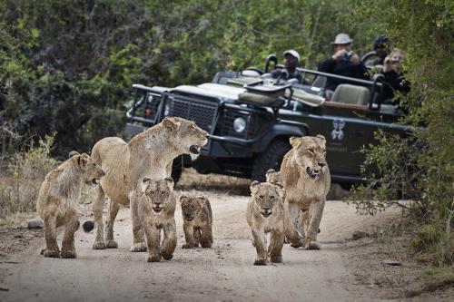 Tsalala Cubs and Vehicle-min.jpg