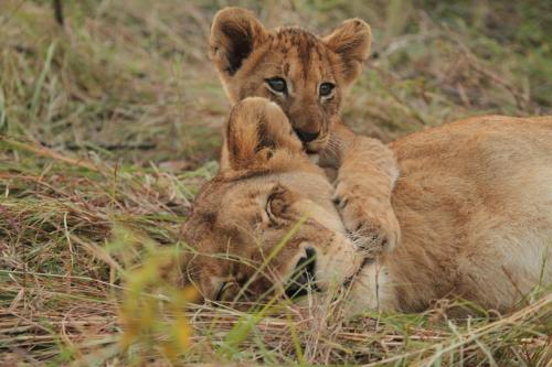 Informations sur le Parc Kruger -