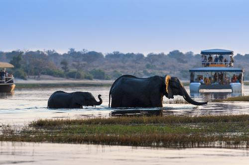 Botswana - Le Botswana propose une expérience de safari inoubliable dans certaines des zones d'observation les plus primitives et les plus isolées d'Afrique. Du pays des merveilles de l'eau aux dunes de sable du Kalahari.