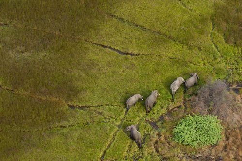 Le Meilleur Du Botswana - Vous recherchez une aventure de la faune africaine exceptionnelle ? Emballez des habits confortables et des jumelles et partez pour un safari palpitant au cœur du pays des merveilles. Ce voyage séduira toutes les types de voyageurs quel que soit leur âge. Ce circuit est modifiable est ajustable.9 jours / 8 nuits