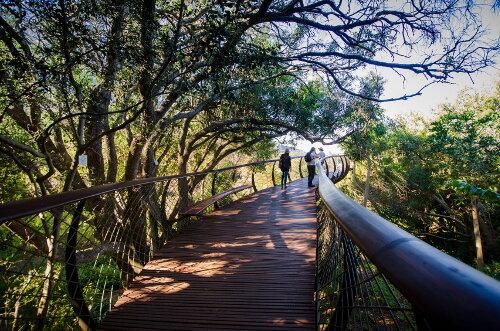 Visitors enjoy the Boomslag at Kirstenbosch (2)-min.jpg