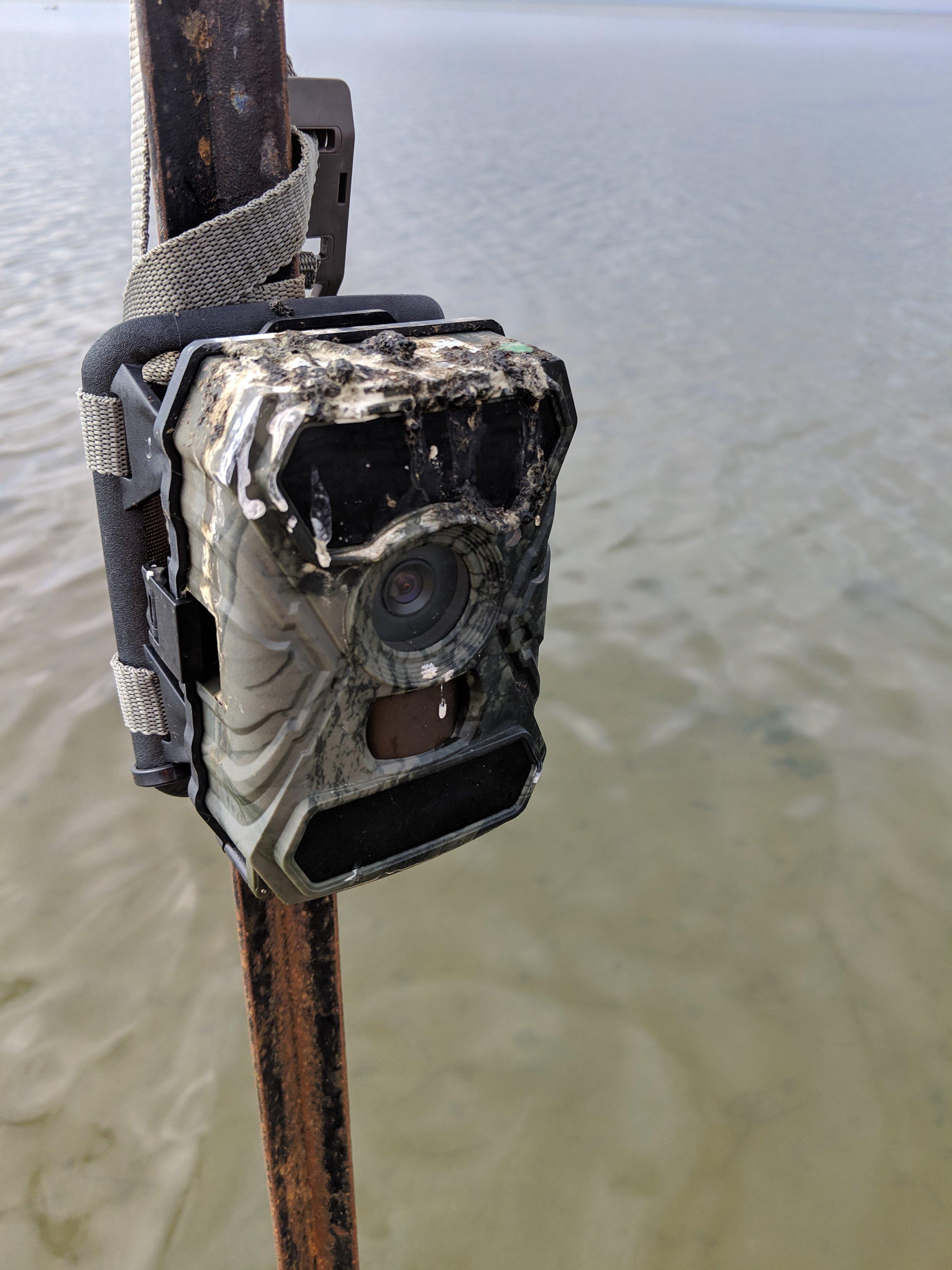 birds provide feedback on the remote cameras