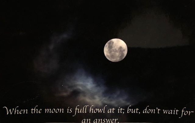 It's the eclipse tonight! Make sure you howl at it and appreciate its beauty. #fullmoon #howlatthemoon