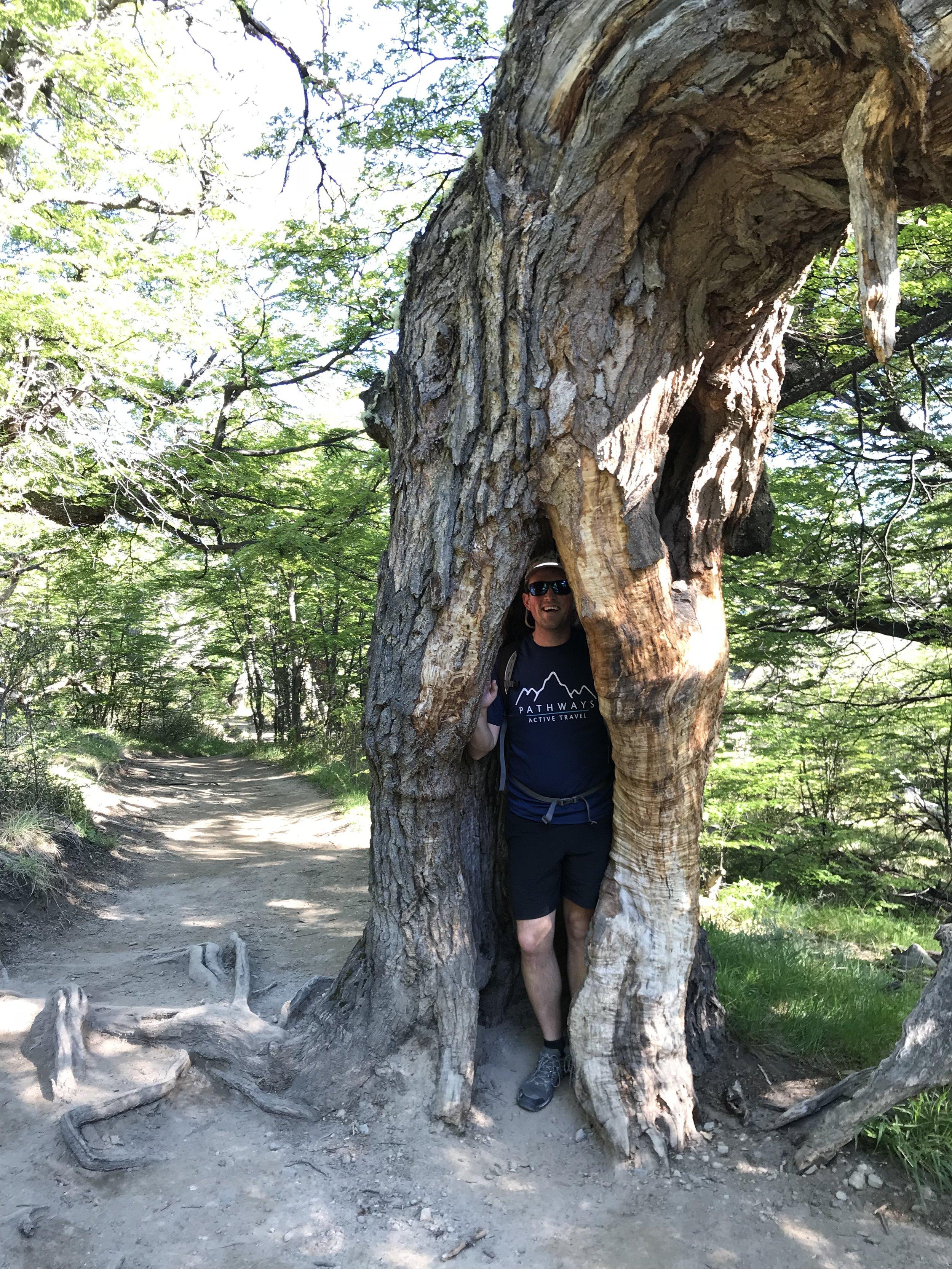 Lenga Forest