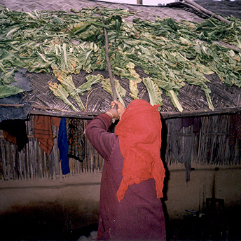 Drying sag.    Ajay / PhotoVoice / LWF