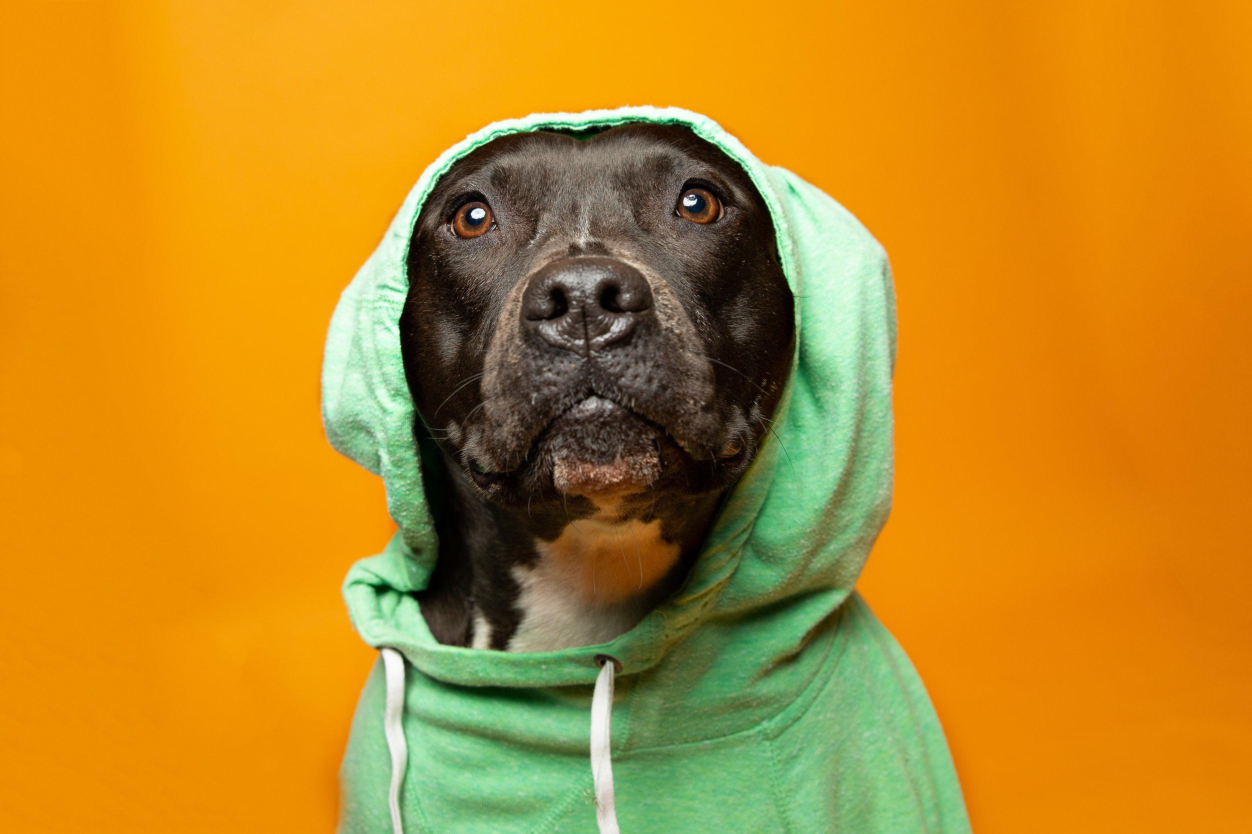 Mika  | Seattle Pet Photography