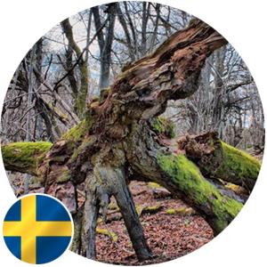 SWEDEN (nr. Gothenburg)    Forest learning