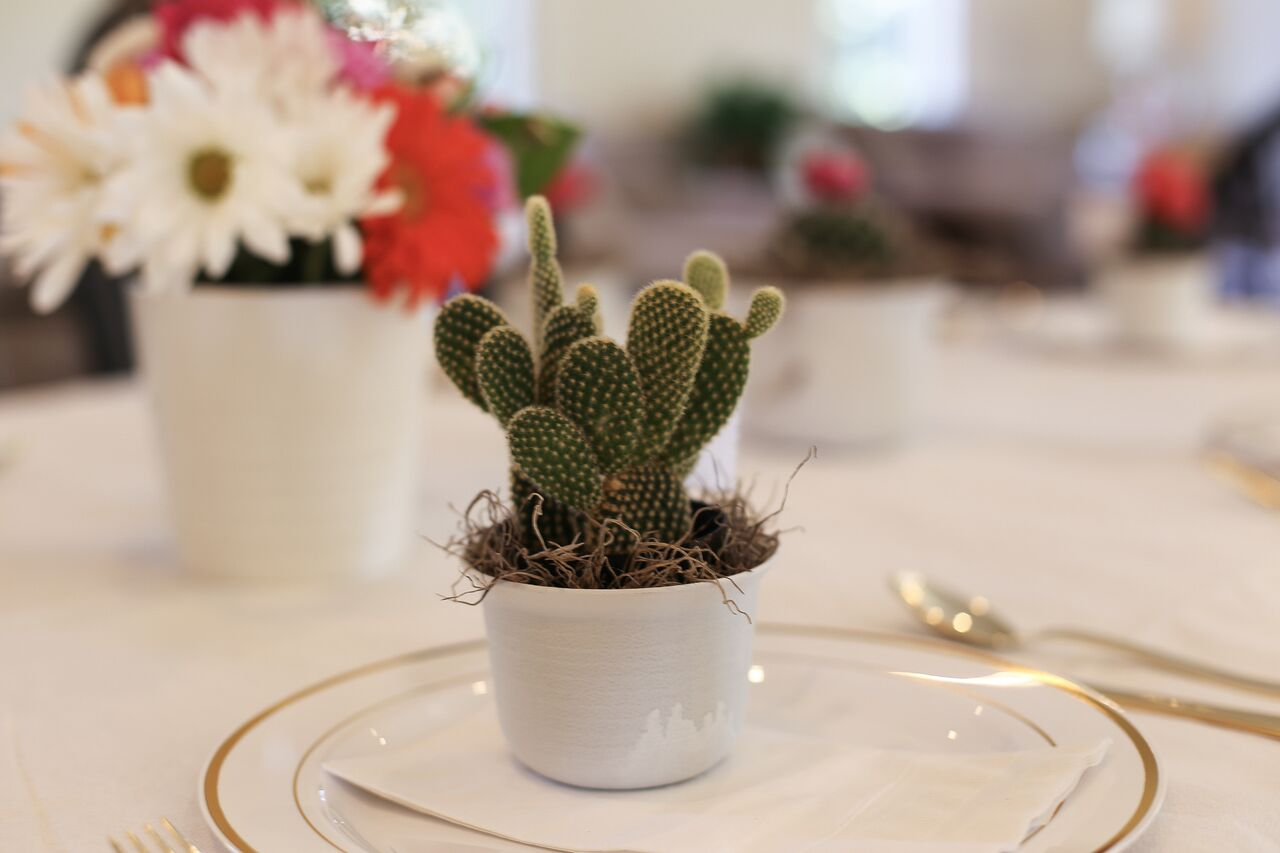 Mini cacti made the cutest party favors at this bridal brunch!