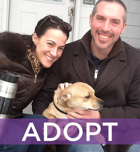Adopting a dog is an incredibly fulfilling experience. Check out our adoptable dogs and see if one is right for your family.