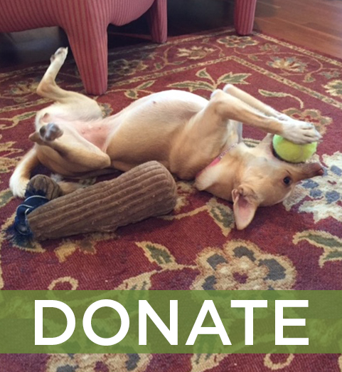 Our work is not possible without your help! We give back 100% of our donations to the dogs in our care. Can you help us?