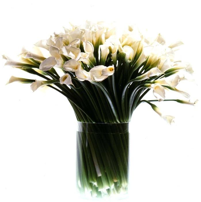 Tall White Callas
