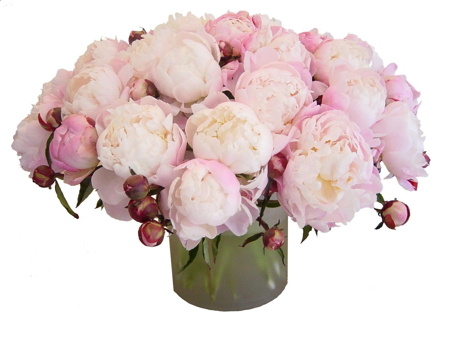 Gardenia Peonies