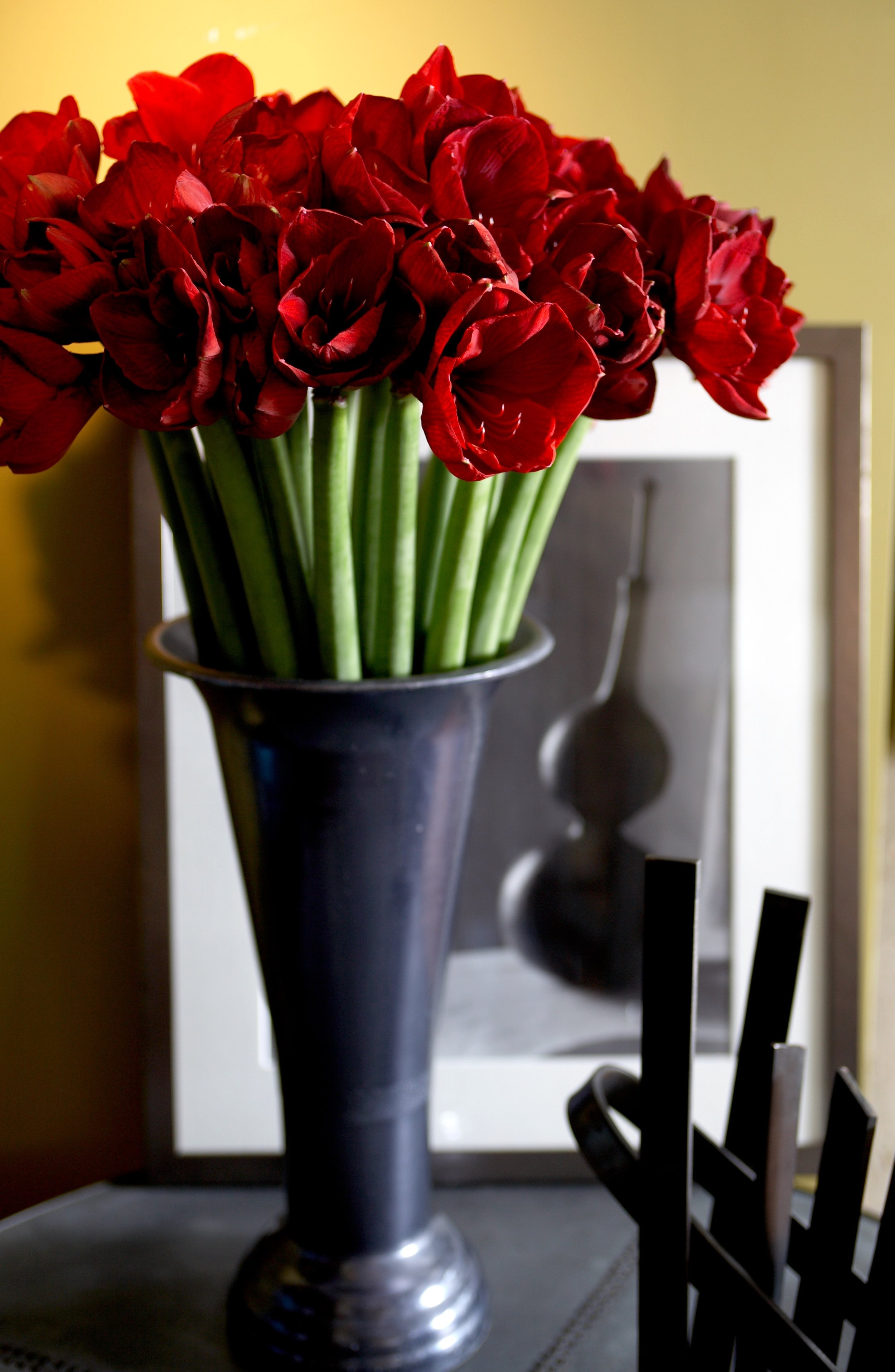 red amaryllis copy.jpg