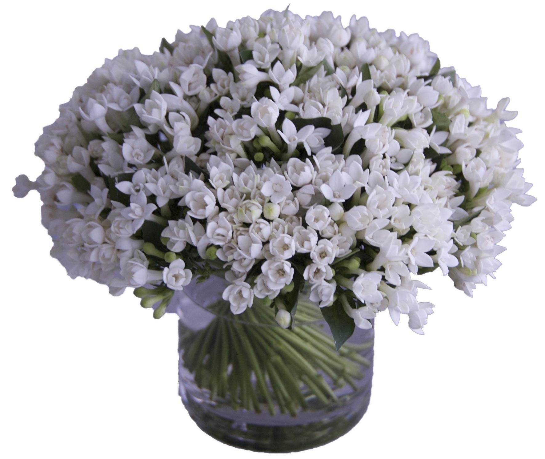 White Bouvardia
