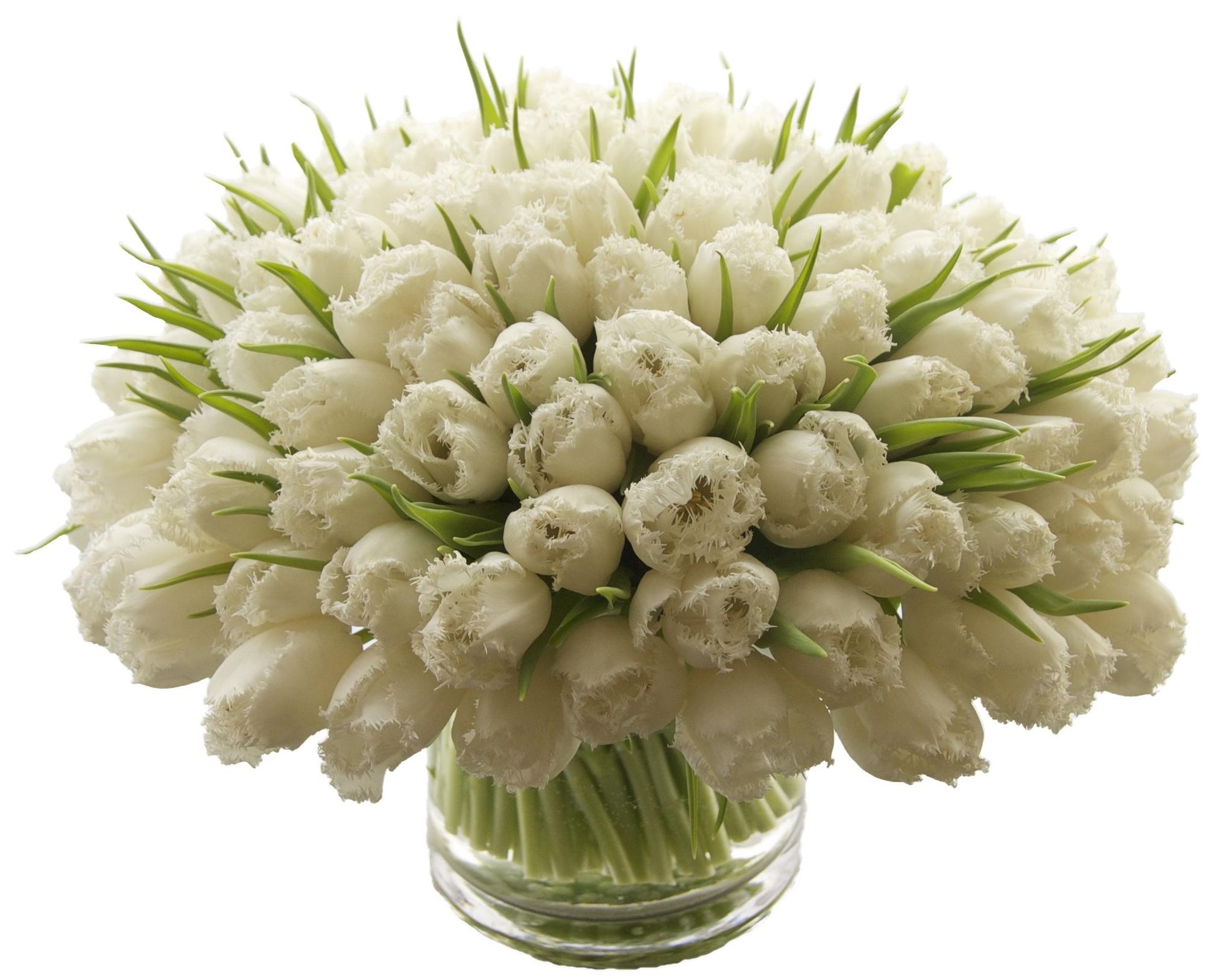 White Fringe Tulips