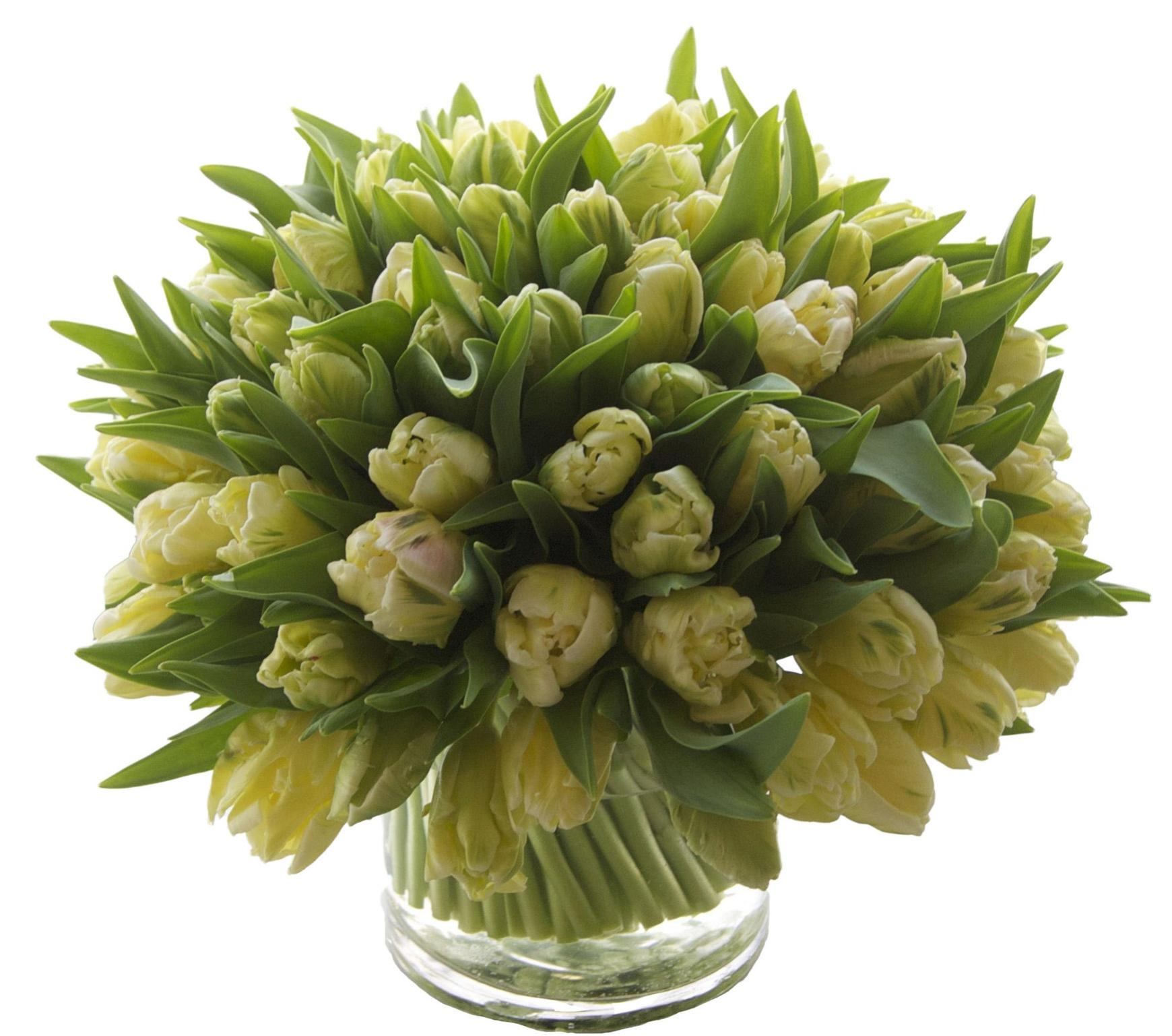 Yellow Libretto Tulips