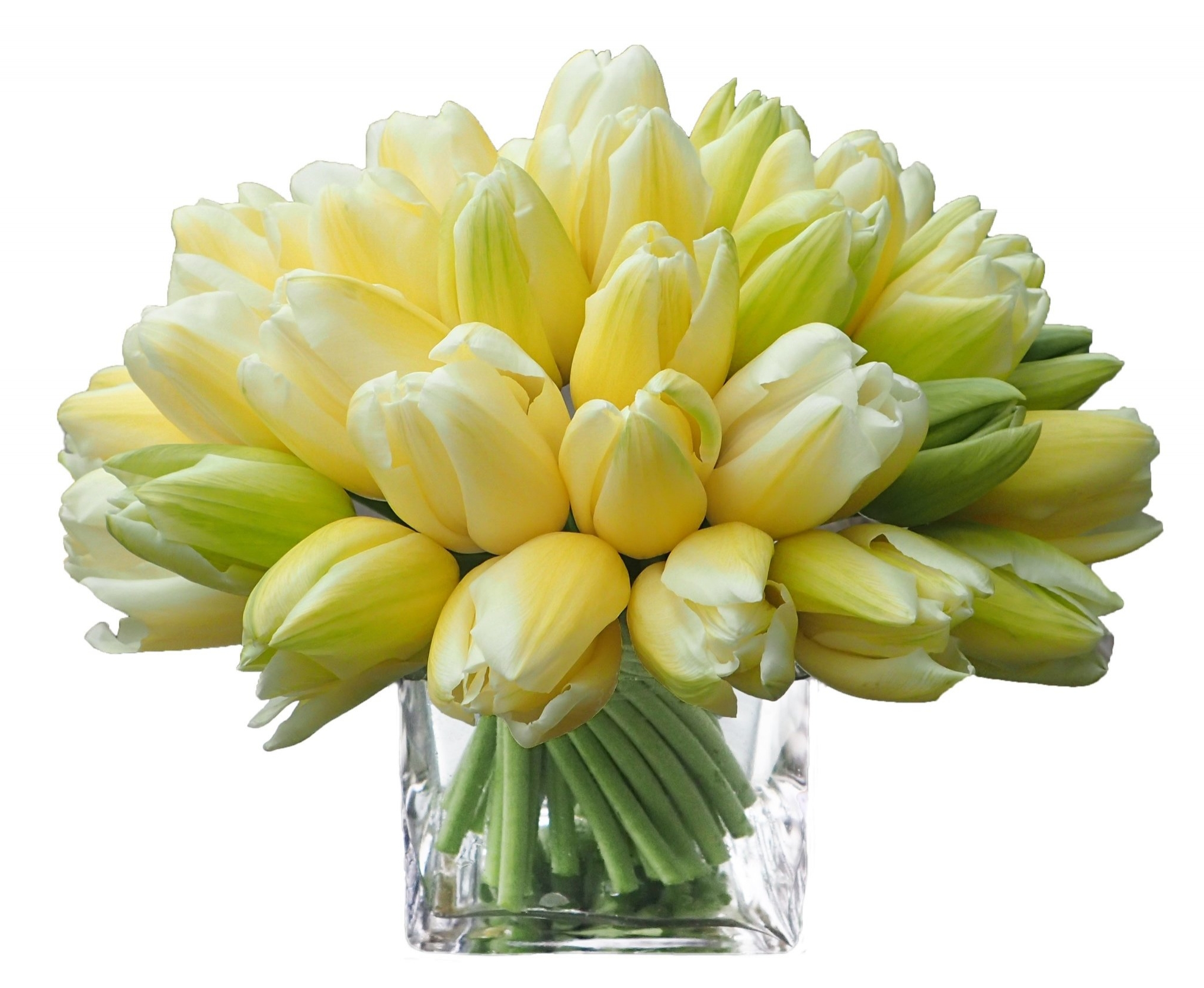 CoupeTulips copy.jpg