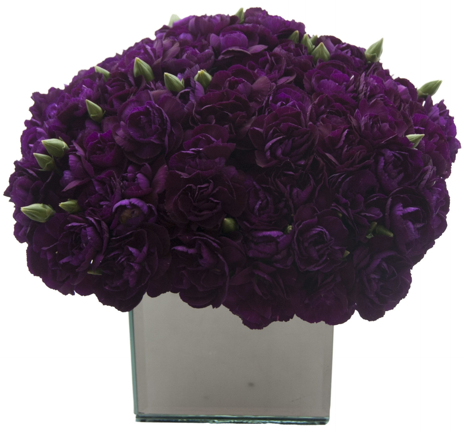 Purple Carnations, from $175