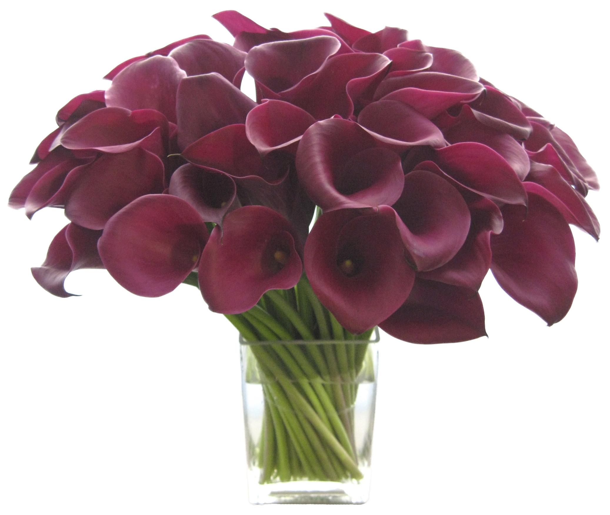 Red Mini Callas