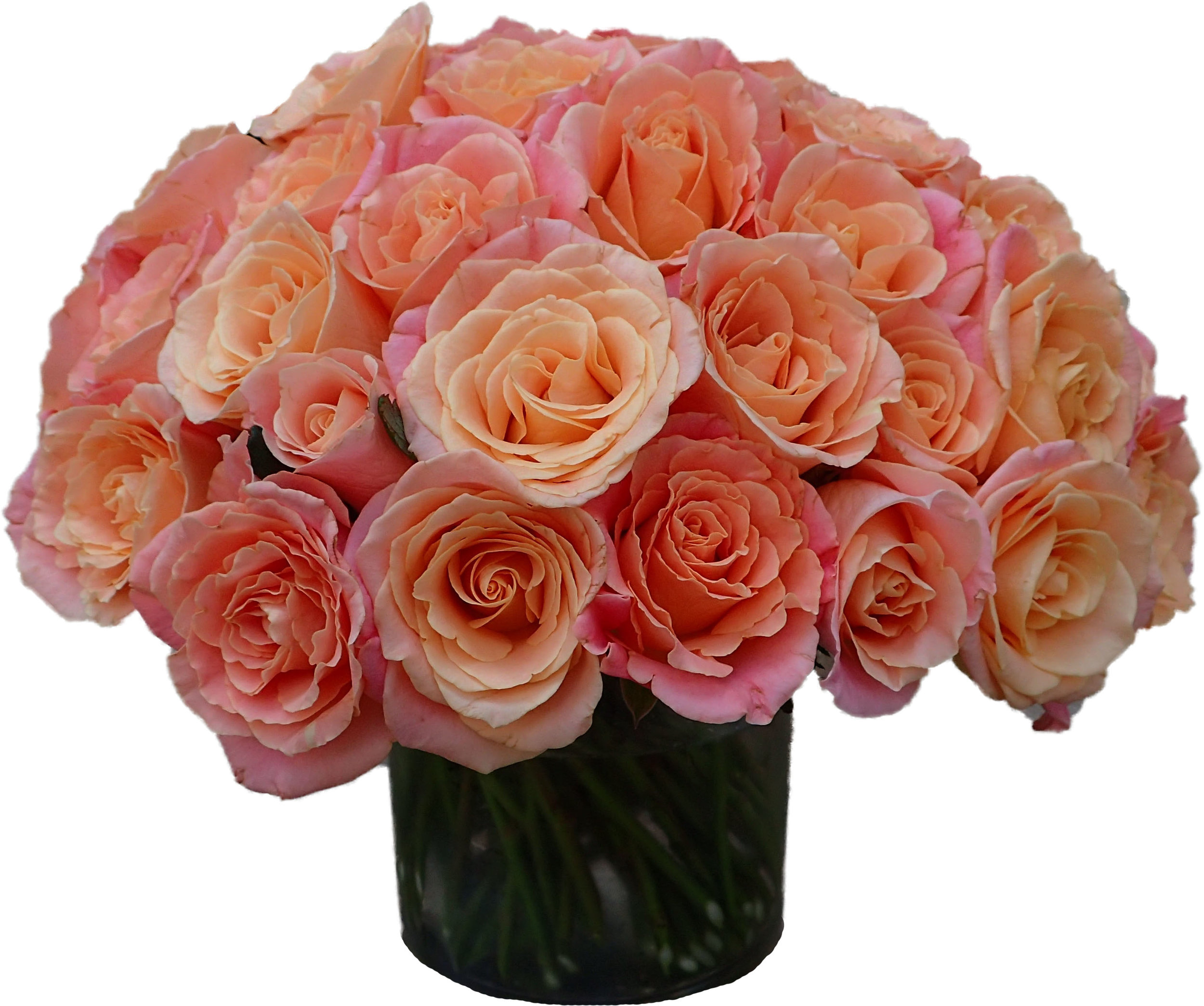 Peach Pink Roses start at $150