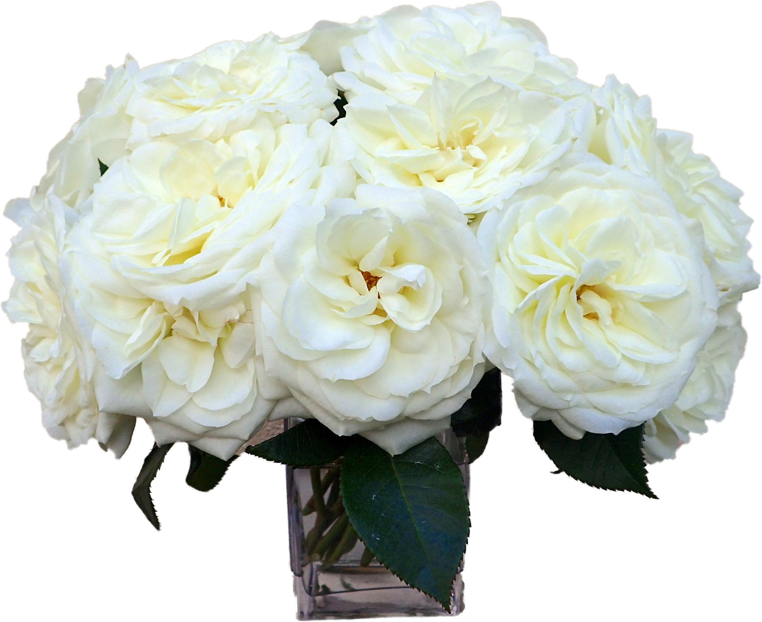 White Garden Roses start at $225