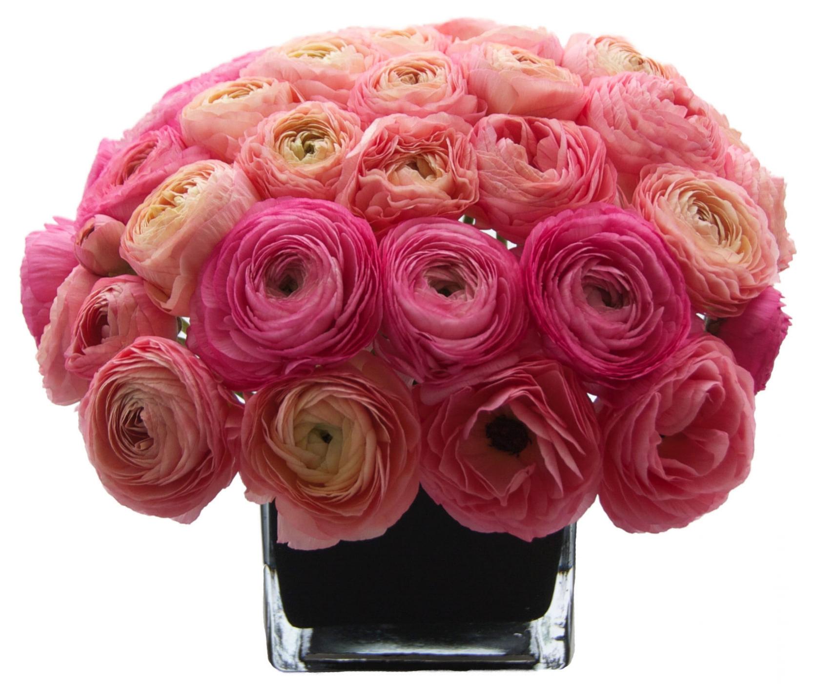 Pink Ranunculus starts at $250