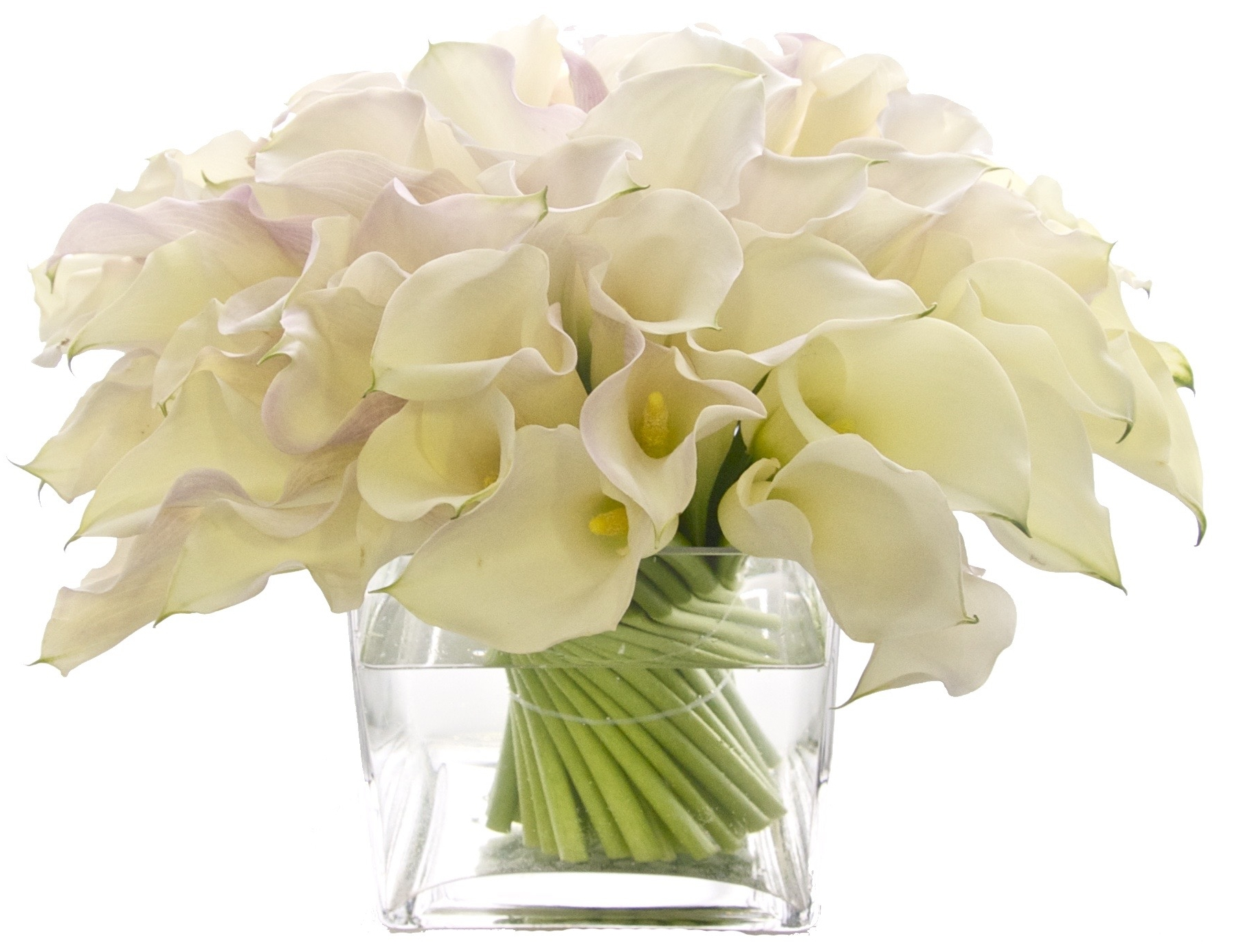 White Callas start at $250