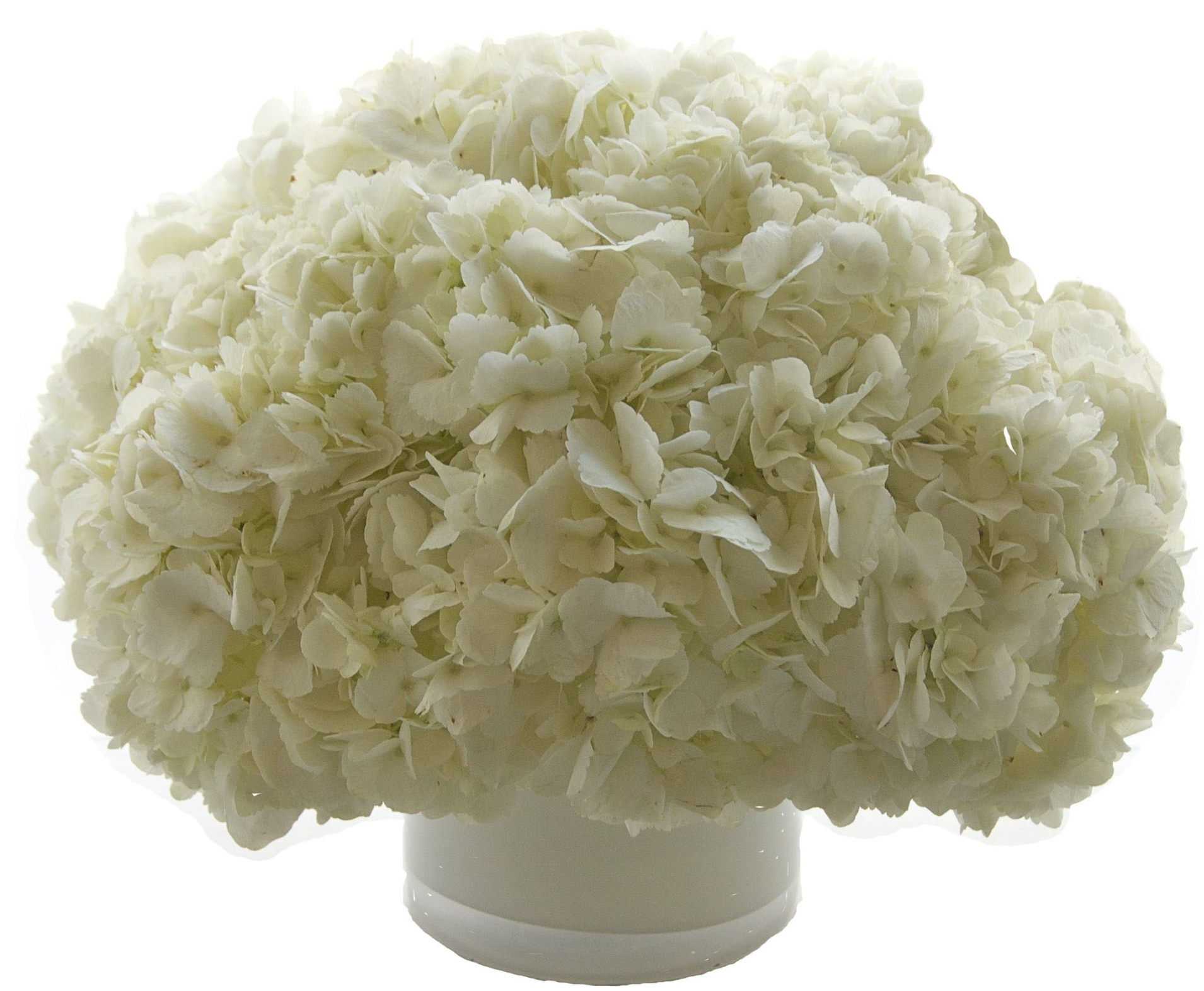 White Hydrangea starts at $100