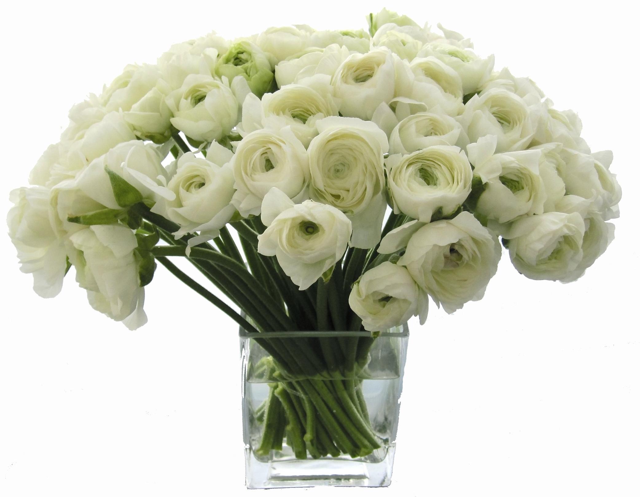 White Ranunculus starts at $250