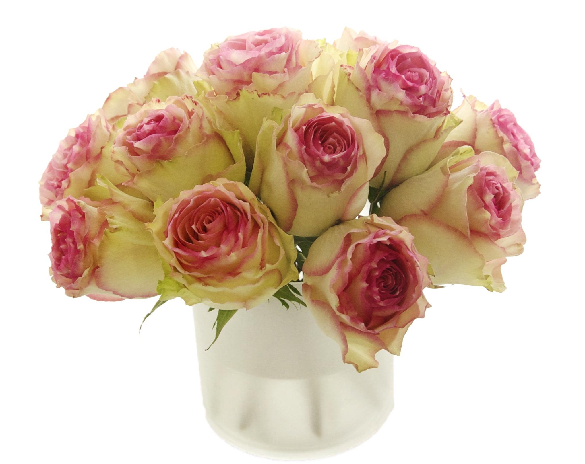 Esperance Roses start at $125