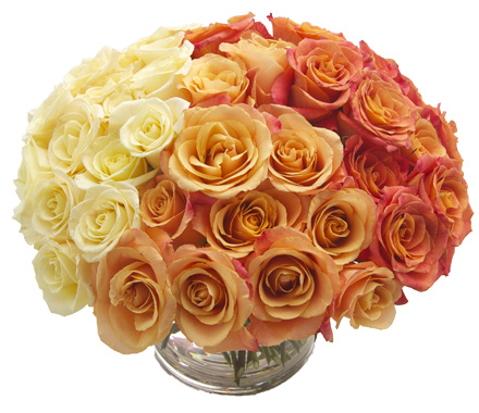 Ombre Roses start at $250