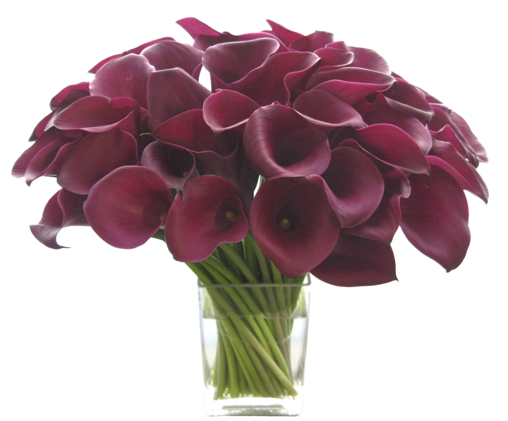Burgundy Callas start at $275