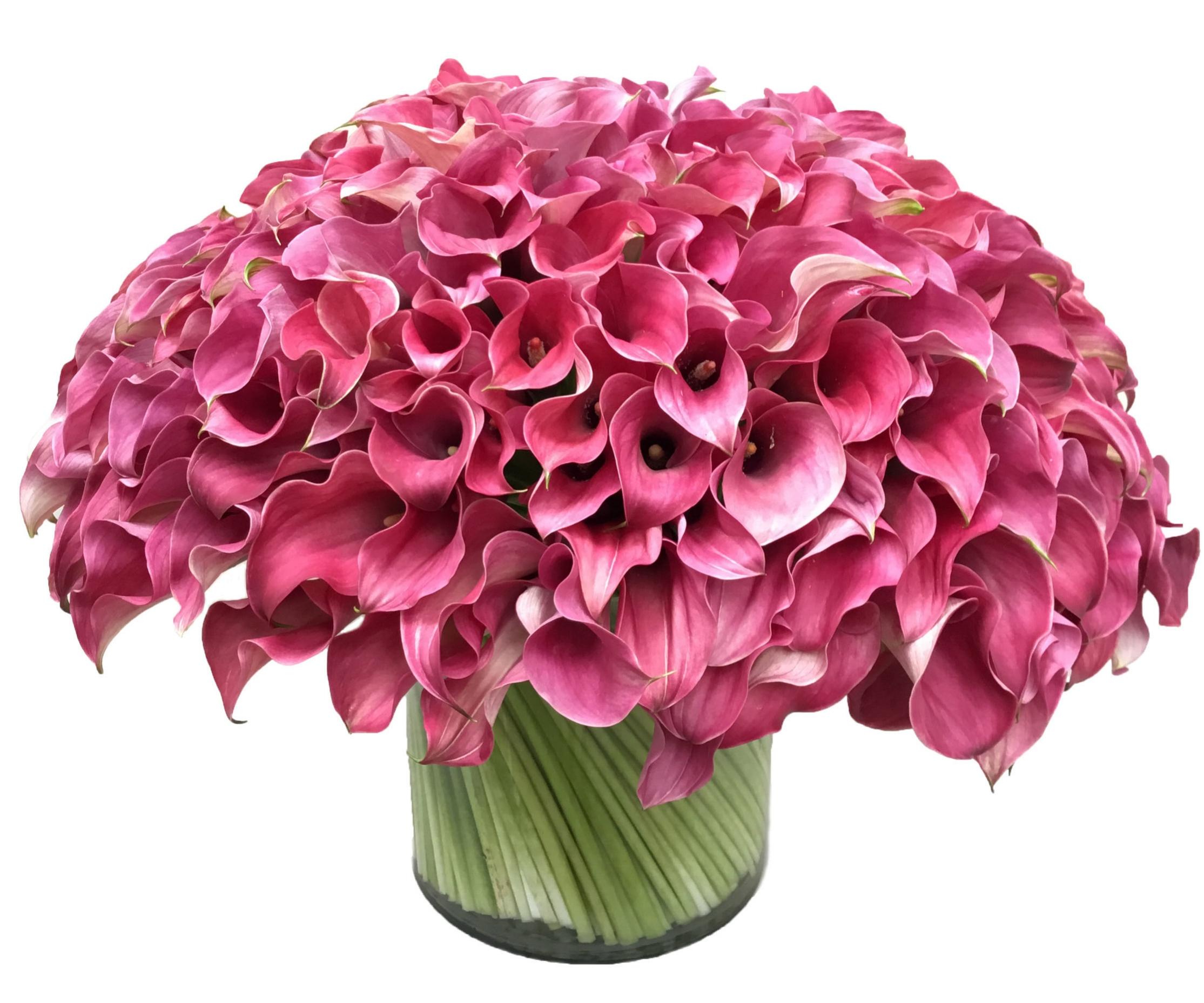 Rose Pink Calla Lilies start at $300