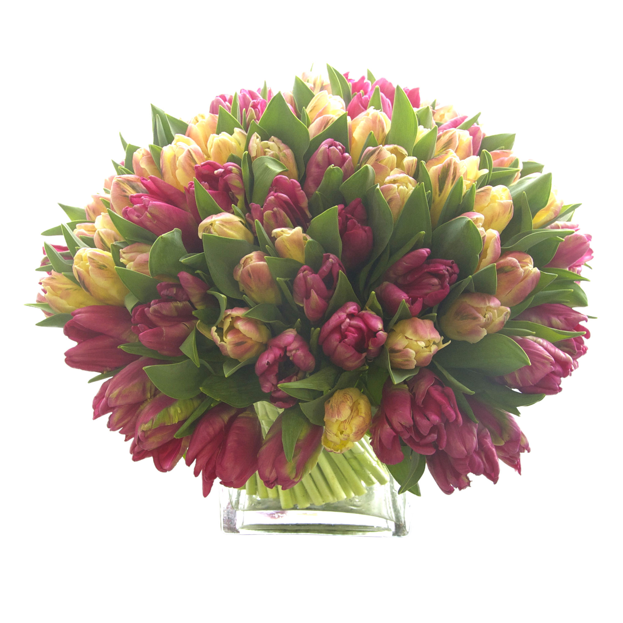 Pink Parrot Tulips Blend